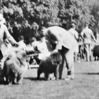 1940 Snapshot reveals chow entry at Suffolk County Kennel Club show