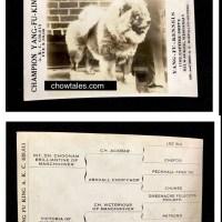 Circa 1920's Stud Card for Ch. Yang Fu King