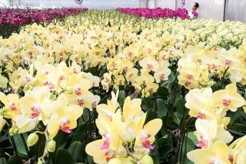 台灣之光 繽紛蘭園免費開放參觀 聽佛經長大的蘭花@彰化 台大花園農場