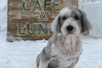 北海道寵物親善咖啡 cafe-map  asahikawa かふぇまっぷ
