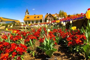 歐風花園與瑞士建築 Heidi`s Village 阿爾卑斯少女海蒂的故鄉 瑞士日本山梨縣啊!Heidi アルプスの少女ハイジ