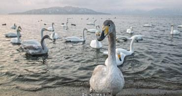 古丹溫泉 西伯利亞嬌客與攝影名家聚集 與天鵝一起泡混浴溫泉 コタン温泉 北海道秘湯