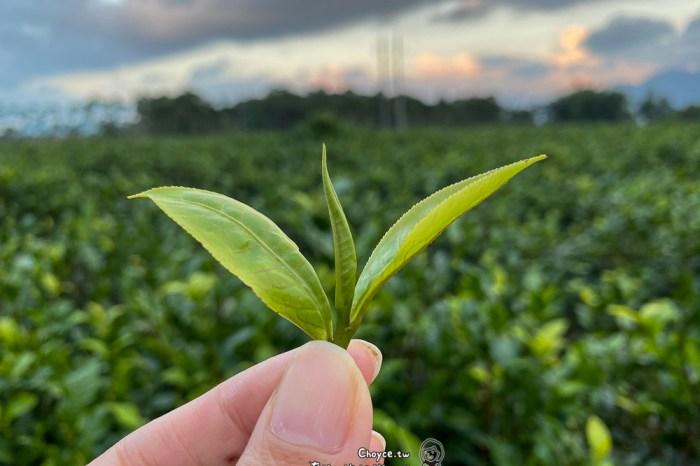 深入花蓮茶園 一日茶農體驗 ba han han non 好茶咖啡工作室 X 吉林茶園 酸柑茶製作,茶珍珠,茶園導覽,專業品茶教學