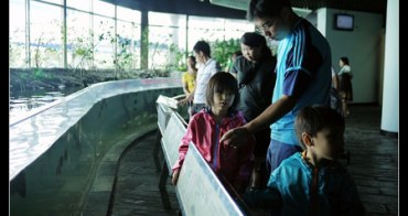 (小一新生上學趣) 在台灣也要同步學美國教材,學習越早效果越好?!