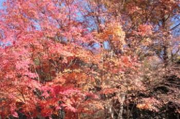 (日本長野縣) 輕井澤星野 啄木鳥森林裡嬉戲 營火,蘋果派,擁抱自然(有野營影片)