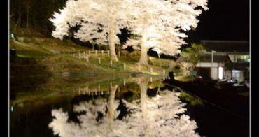(日本岐阜縣) 日本三大美人湯 下呂溫泉 苗代櫻夜櫻 水面倒影,幻想二重奏