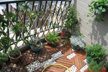 媽媽的菜園