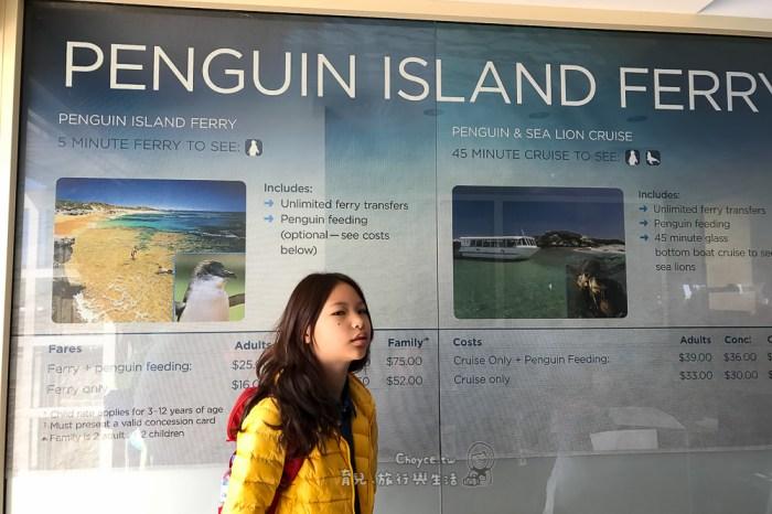 澳洲親子遊 神仙企鵝+海獅與海豚觀察 企鵝島觀光導覽 神仙企鵝(Eudyptula minor)Rockingham Wild Encounters