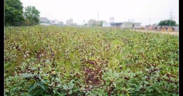 (台灣好好玩) 宜蘭綠活-食材之旅 童話村有機渡假農場 手採洛神花自製蜜餞食譜大公開