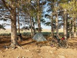 Campsite in the pines