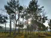 Sun thru trees, Brushwood