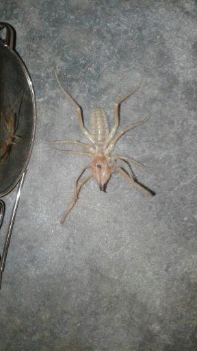 35-big-bug