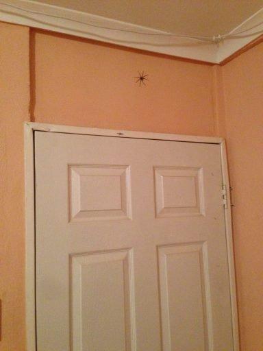 36-spider