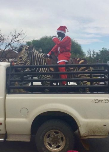 An even rarer site: Santa in a holiday parade, riding a zebra! Photo credit: PCV Angel