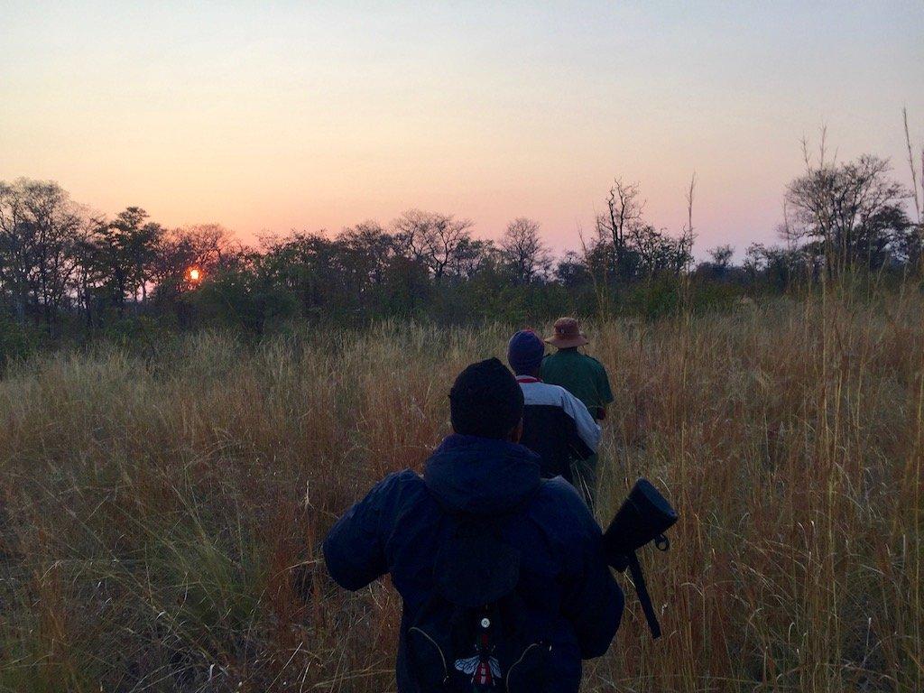 Game Count in Zambezi