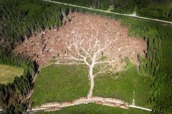 trees345.jpg