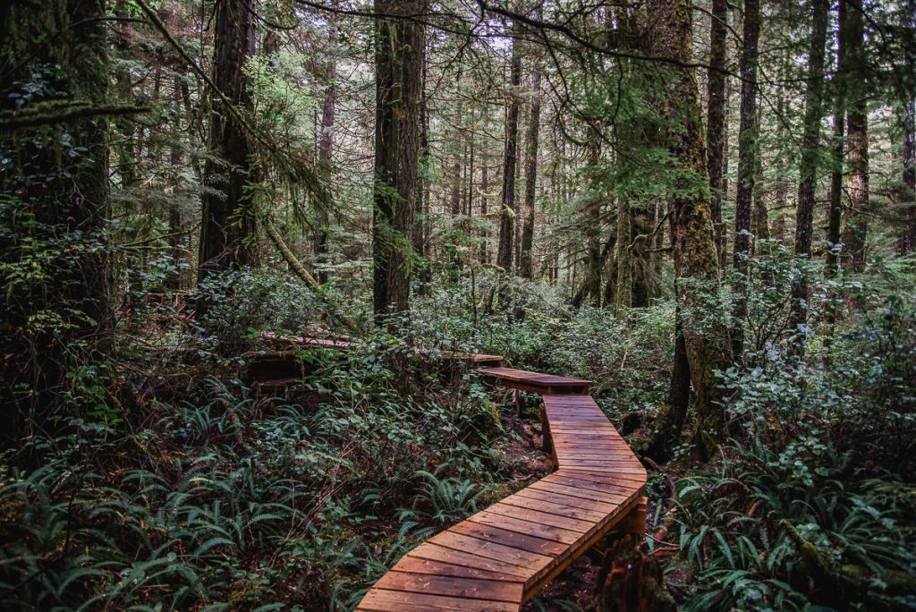 Rainforest Hiking Trail in Tofino