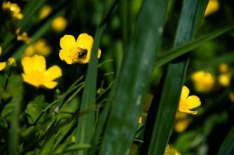 Alaskan garden flowers-11