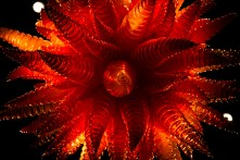 chihuly-13