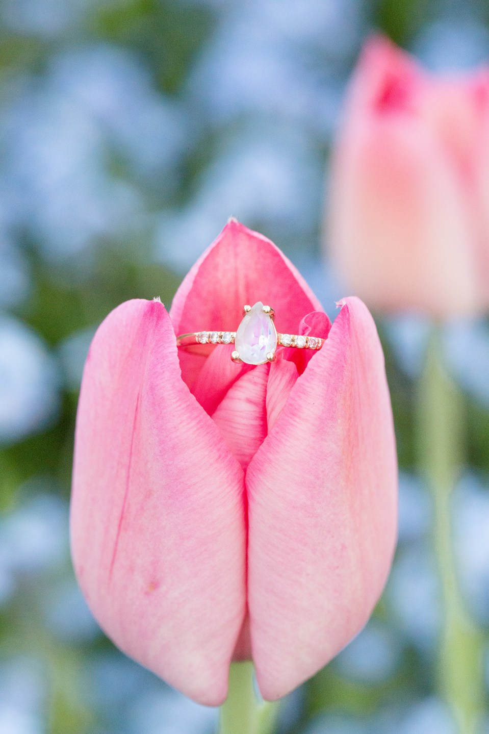 closeup of teardrop engagement ring on a pink tulip with blue flowers in the background