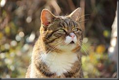 cat-637501_960_720