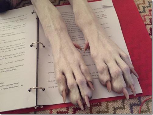 Buddy Volume 3, Buddy's paws over my manuscript