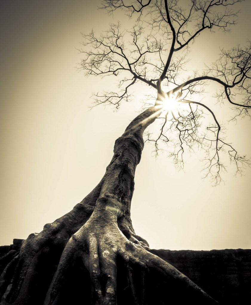 tree and sun hdr