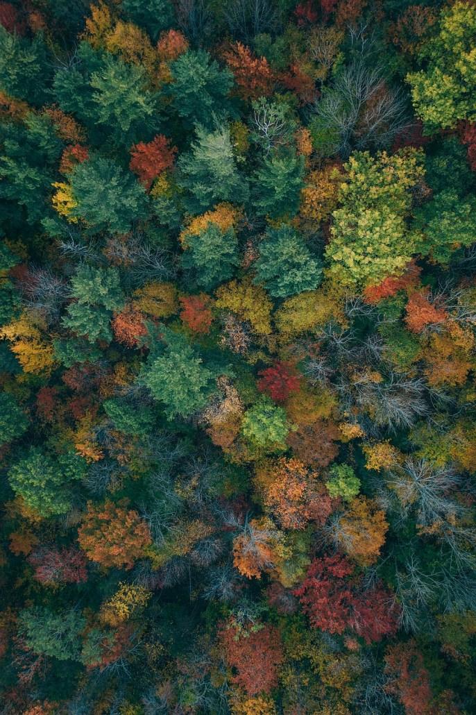 Leaf Peeping in Neu England – Ein Herbstbesuch in Vermont