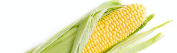 Because corn is high in Oligosaccharides, it needs to be eliminated in phase one of the diet