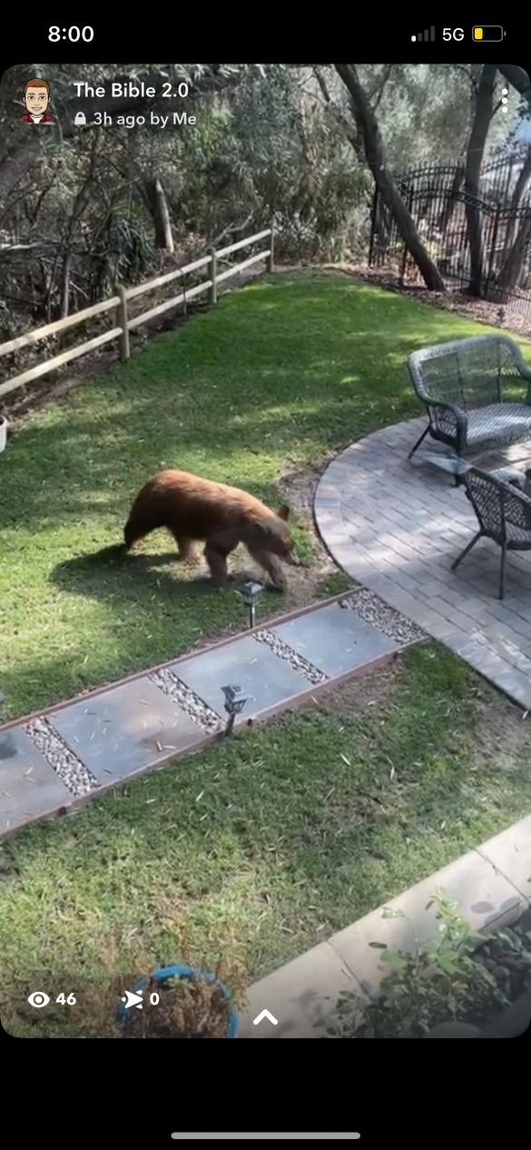 Meet Scampi the Bear