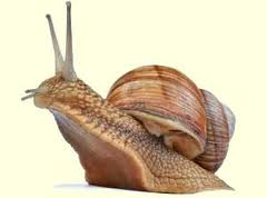 Snail Handling/Management And Production Tips