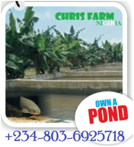 Fish Pond Construction In Nigeria (Business Plan and Feasibility Study)