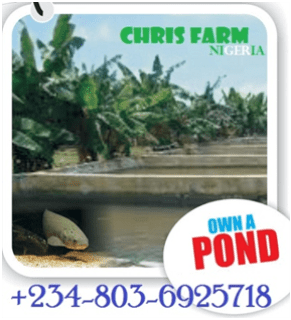 How to control Pollution in your pond