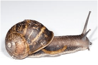 Snail Production / Get A Feasibility Study & A Business Plan