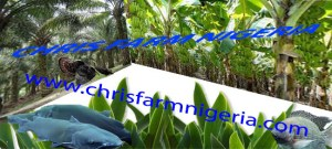 Integrated Fish Chicken Farming Business Plan