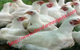 POULTRY FARMING BUSINESS PLAN AND FEASIBILITY STUDY FOR INVESTORS