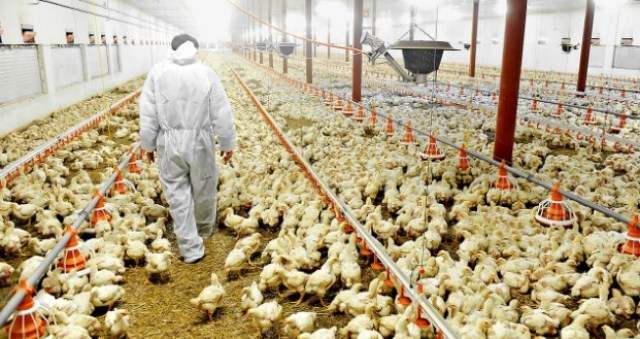 Top Business Plans And Feasibility Study On Poultry Farming Business