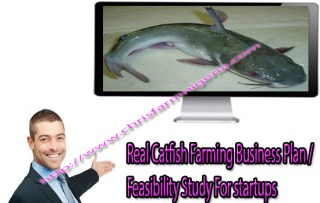 Classic Fish Farming Business Plans And Feasibility Study