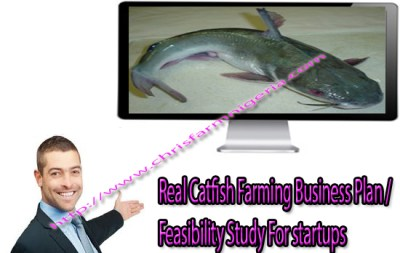 Real Catfish Farming Business Plan/Feasibility Study For startups