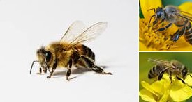 Business Plans Feasibility Report On Bee Keeping & Honey Processing Unit