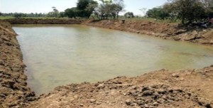 Fish Pond Management For Successful Farming Business
