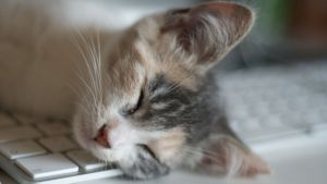 Whose cat doesn't just lie across the keyboard? It makes typing so…simple.