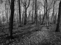 Forestlight3