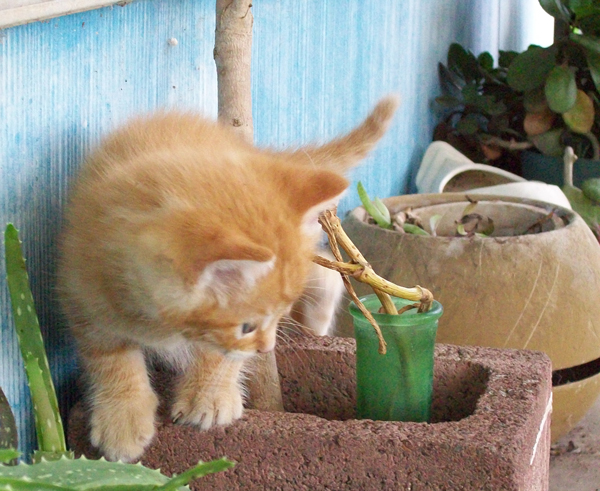 origional-kitty001