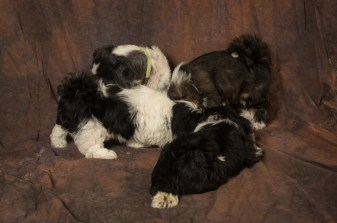 Fluff and Pups (142)