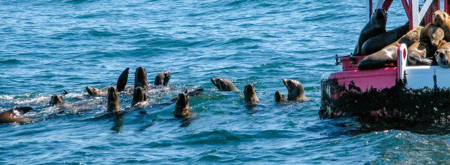 Sea Lions at Avila Beach
