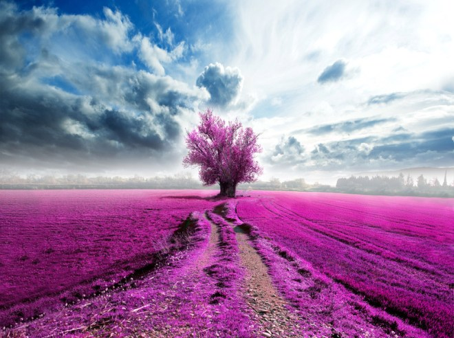 A field with fuchsia flowers, blue sky, and tree in distance