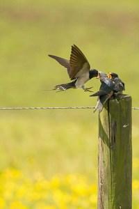birdsvincent-van-zalinge-ECPZmD3V_cQ-unsplash copy