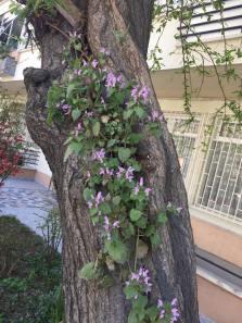 copac 3