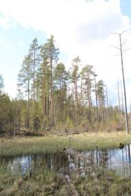 Jämsänkoski trip (7)
